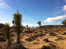 约书亚树沙漠风景 免版税图库摄影