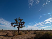 约书亚树cloudscape在南加州高沙漠 免版税库存图片