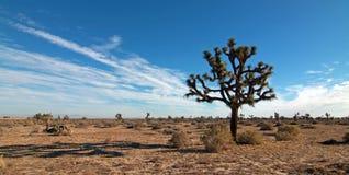 约书亚树cloudscape在Palmdale和兰卡斯特附近的南加州高沙漠 免版税库存图片