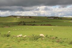 约克夏,英国的绿色领域 库存图片