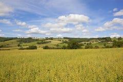 约克夏黄木樨草燕麦和补缀品风景 免版税库存照片