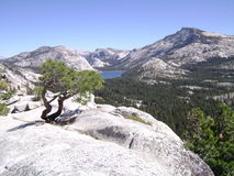 约塞米蒂国家公园 免版税库存图片