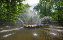 级联喷泉狮子peterhof彼得斯堡俄国st 免版税库存照片