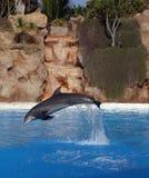 级联海豚前面 免版税库存图片