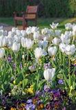纪念庭院郁金香和公园长椅 免版税图库摄影