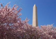 纪念碑华盛顿 库存照片