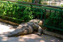 纪念碑鳄鱼 库存照片