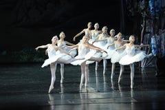 纯净的天鹅女孩排队了整洁芭蕾天鹅湖 库存照片