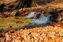 纯净的小河在森林里 免版税库存图片