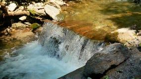 纯净的淡水瀑布在森林里 股票录像