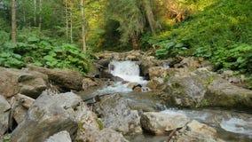 纯净的淡水瀑布在森林里 影视素材