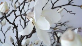 纯净的白色兰花分支