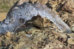 纯净的矿泉水的水源 库存照片