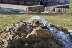 纯净的矿泉水的水源 免版税库存图片
