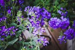 纯净的紫罗兰 abstruct背景表面人力母亲自然本质 免版税库存照片