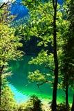 纯净的绿色自然 库存图片
