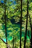 纯净的绿色自然 免版税库存照片