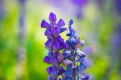 纯净的紫色花在庭院背景中 免版税库存照片