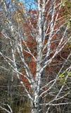 纯然秋天的对比 库存照片