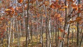 纯然秋天的对比 图库摄影