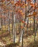 纯然秋天的对比 库存图片