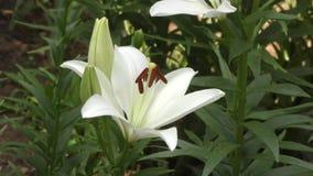 纯白的庭院 影视素材