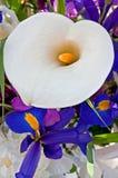 纯白花束的水芋属 库存图片