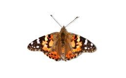 纯的蝴蝶 免版税库存图片