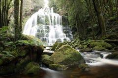 纳尔逊瀑布在塔斯马尼亚岛 免版税库存图片