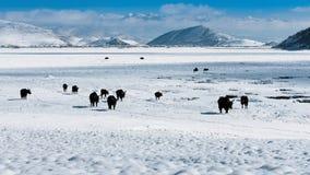纳帕草原在冬天 库存图片