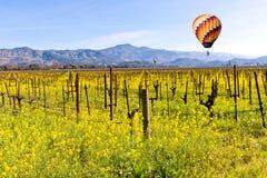 纳帕谷葡萄园和芥末在春天 免版税库存图片