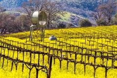 纳帕谷葡萄园和芥末在春天 免版税图库摄影