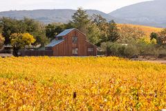 纳帕谷葡萄园在秋天颜色和谷仓 免版税库存照片