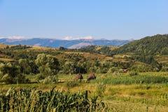 巴纳特的乡下,罗马尼亚 免版税库存图片