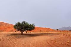 纳米比亚沙漠风景,纳米比亚 免版税库存图片