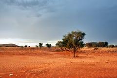 纳米比亚沙漠风景,纳米比亚 库存照片