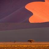 纳米比亚沙漠,在日落的Sossusvlei 库存图片
