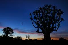 纳米比亚颤抖结构树 免版税库存图片