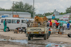 纳米比亚-奥普沃- Kunene地区 免版税图库摄影