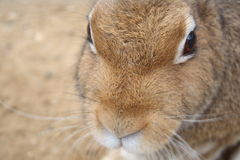 纵向兔子 免版税图库摄影