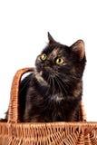 纵向在一个wattled篮子的一只猫 库存图片