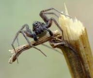 纵向蜘蛛 免版税库存照片