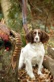 纵向西班牙猎狗蹦跳的人森林地 免版税库存图片