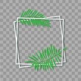 纸与热带叶子的裁减白色框架 两倾斜了在别的方形的框架谎言一 传染媒介卡片例证与 皇族释放例证