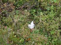 纸抽杀在足迹的森林里 库存照片