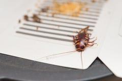 贴纸捉住的蟑螂 免版税库存照片
