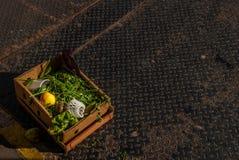 纸条板箱充满残余蔬菜和水果 库存照片