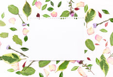 纸片文本的在花、瓣和绿色框架  免版税图库摄影