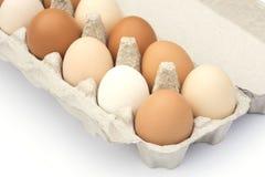 纸盒鸡蛋 图库摄影