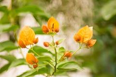 纸花在泰国的庭院里。 免版税图库摄影
